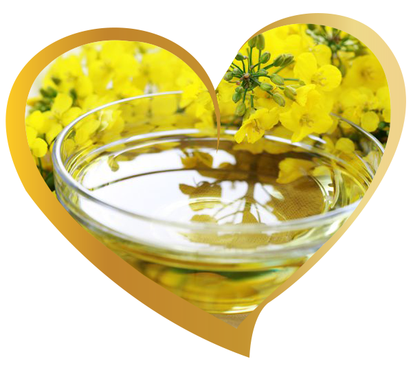 Canola Cooking Oil | Exporter & Supplier Refined Canola Cooking Oil